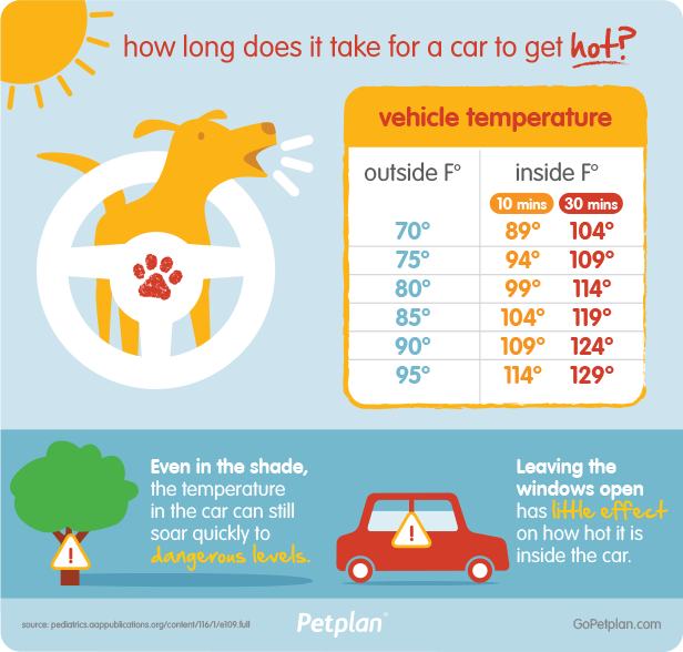 In-car temperatures rise quickly! Infographic created by Petplan.