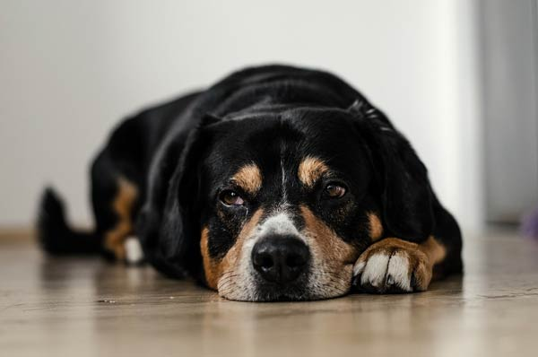 Sad, lonely dog.
