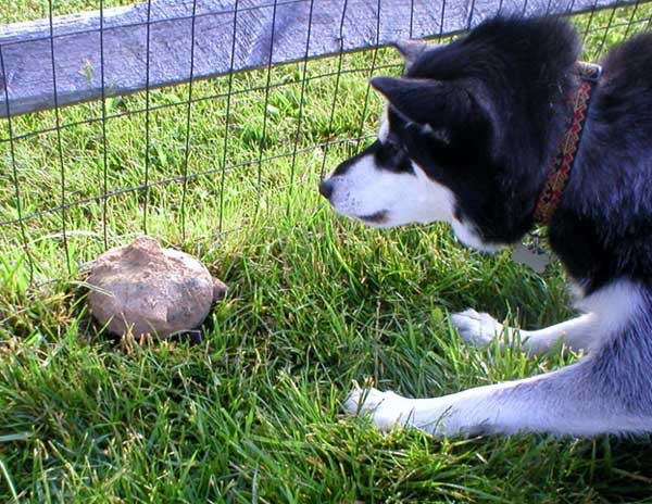 Lucy isn't sure what this moving rock is!