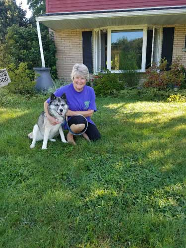 Our favorite Siberian Husky / Cattle Dog Mix Ella found her forever home - she's adopted!