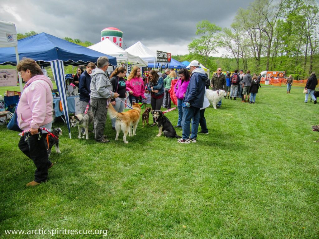 Despite some clouds and a few rain drops, the crowds were out in full force at the 2017 DeBella Dog Walk.