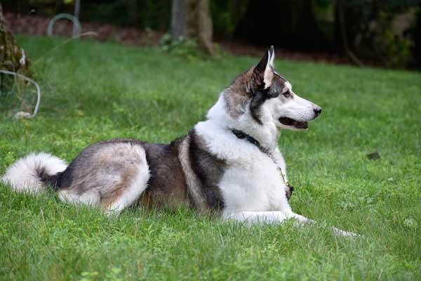 Izzy and canine epilepsy.