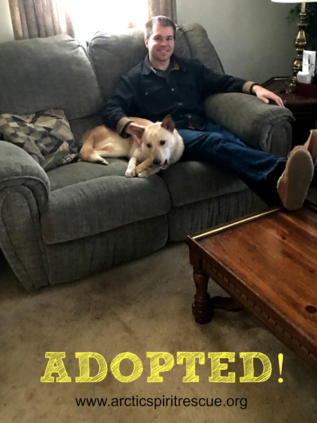 Petty the Siberian Husky / Cattle Dog mix was recently adopted. Congratulations Petty!