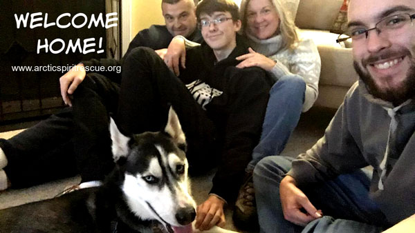 Al the Siberian Husky was adopted into his forever home recently!