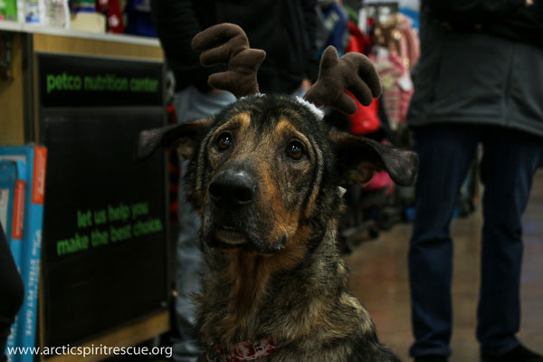 Brewster is a senior Shepherd Mix looking for a second chance at a good life.