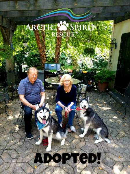 Misty and Maverick the Siberian Huskies found their forever home!