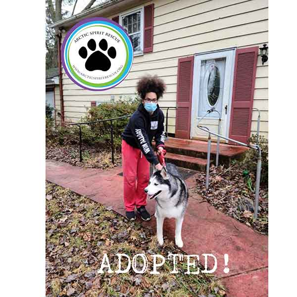 Aspen the Husky has been adopted! Yay Aspen!
