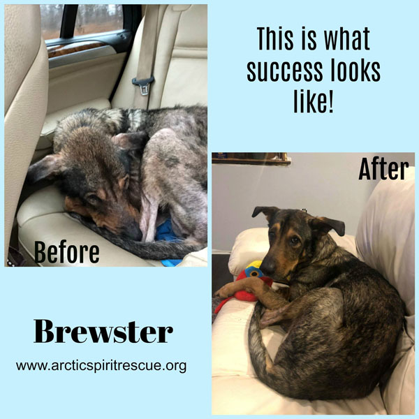 This is what success looks like - Good boy Brewster!