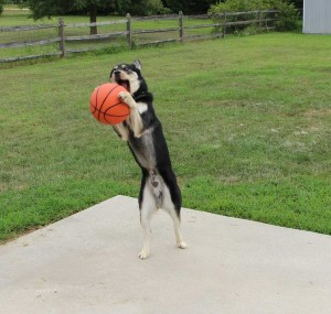 Kato's an active dog - he loves sports!